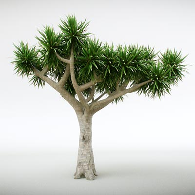 3D model of the Dracaena draco