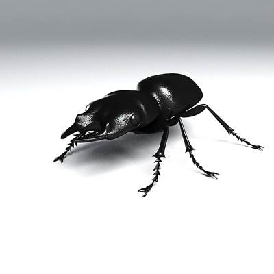 Photorealistic 3D model of a Ground beetle