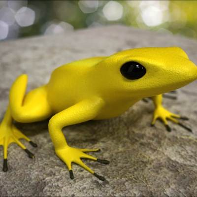 A photorealistic 3D model of an poison dart frog