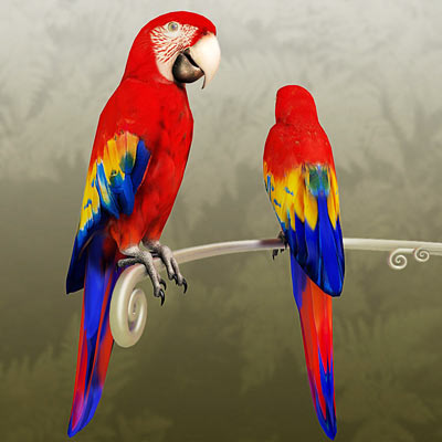 3D model of a red macaw