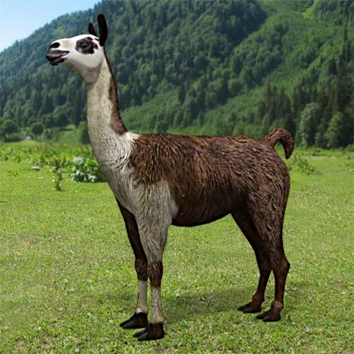 The 3D model of a domestic llama