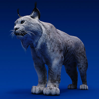3D model of a Canadian lynx<br />