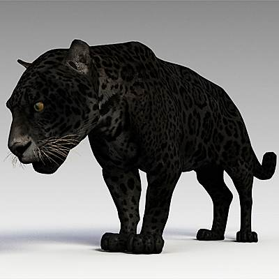 The 3D model of a Panther