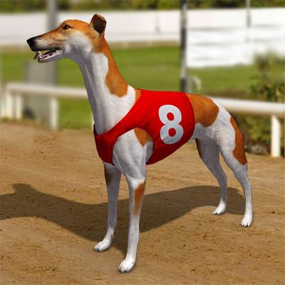 A photorealistic 3D model of a greyhound