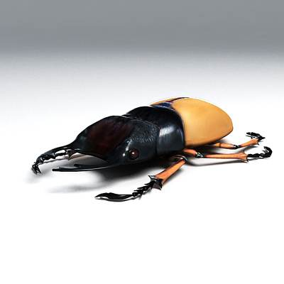 Photorealistic 3D model of a Stag beetle