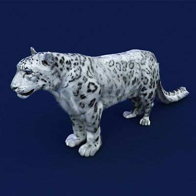 3D model of a Snow leopard<br />