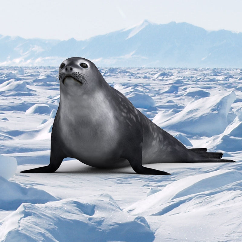 3D model of a Weddell seal