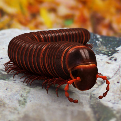 3D model of an Archispirostreptus gigas