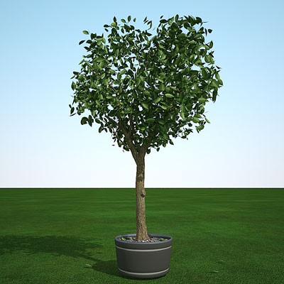 3D model of a Cedar Elm in summer
