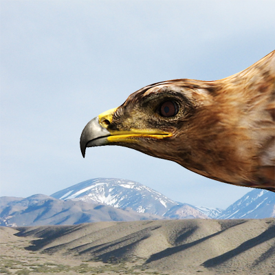 3D model of an Indian spotted eagle