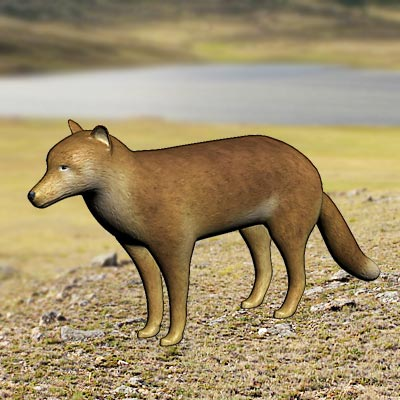 3D model of the Falkland Islands Wolf