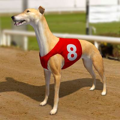 3D model: A set of 6 racing greyhounds with number jackets