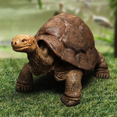 3D model of a Rare turtle