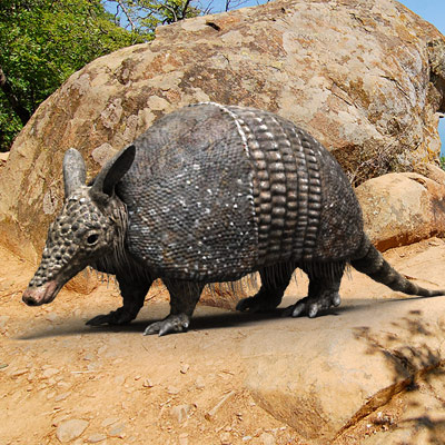 3D model of an Armadillo