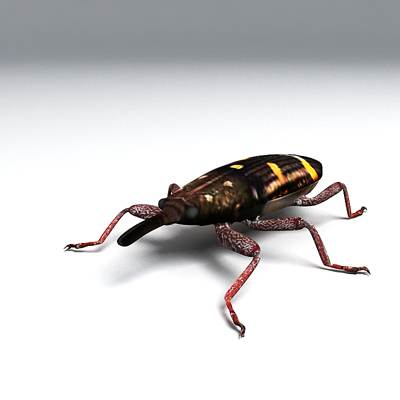 Photorealistic 3D model of a Weevil