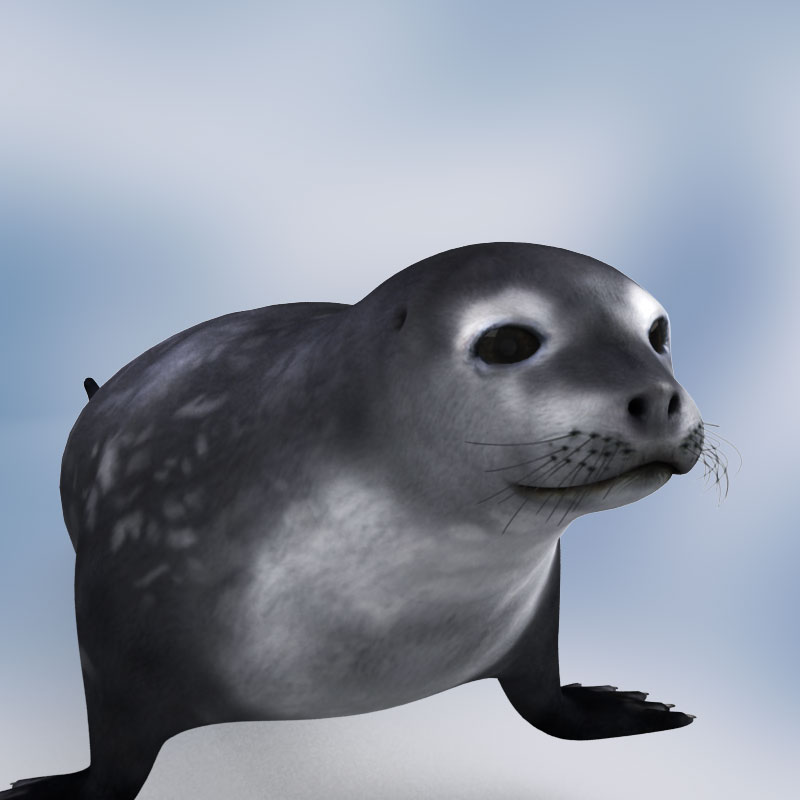 3D model: Weddell seal. $69.95 [buy, download]