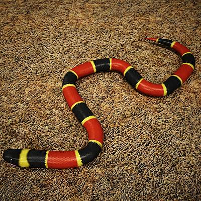 A photorealistic rigged 3D model of a coral snake