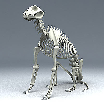 3D model of a Jaguar skeleton
