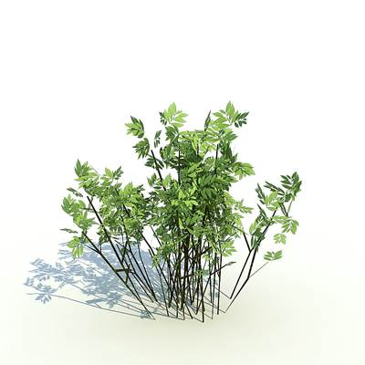 3D model of low-growing bushes