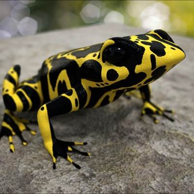 A photorealistic 3D model of an Atelopus frog