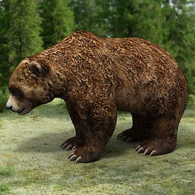 The 3D model of a Brown bear