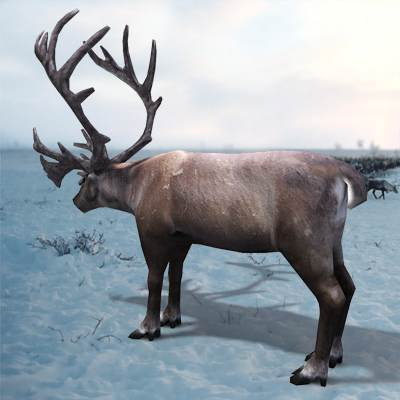 The 3D model of a Reindeer