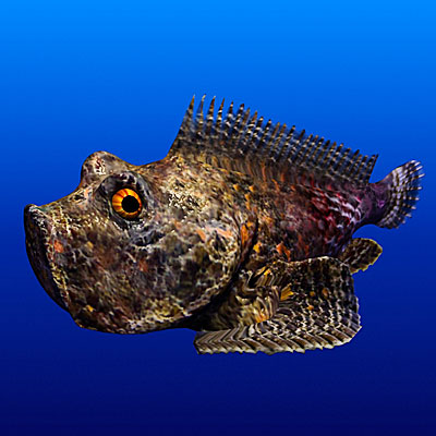 3D model of Stonefish