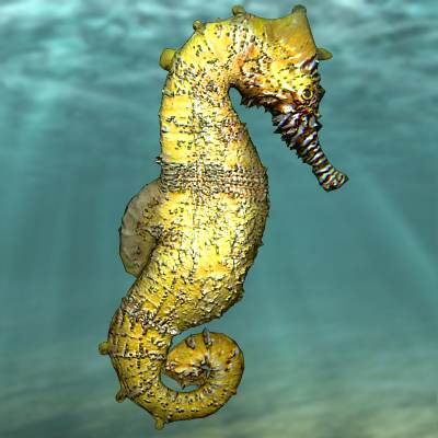 The 3D model of a Hippocampus (genus) - Seahorse