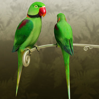 3D model of an alexandrine parakeet