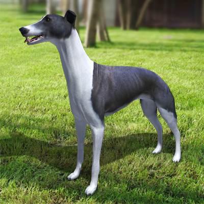3D model: A set of 6 greyhound