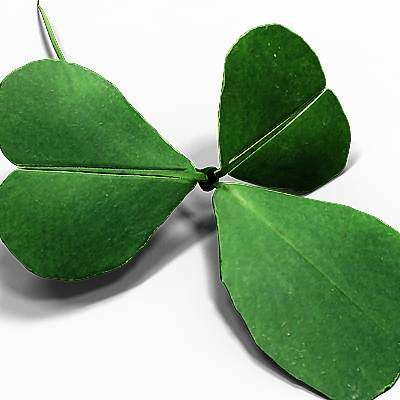 The 3D model of a Shamrock