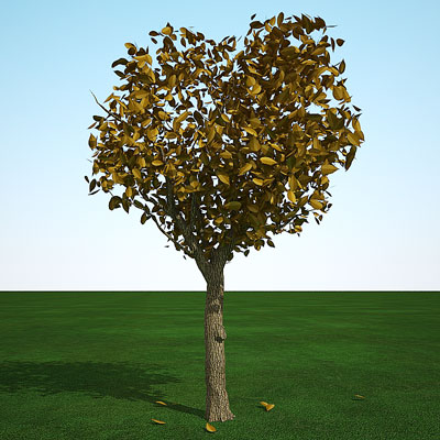 3D model of a Cedar elm fall