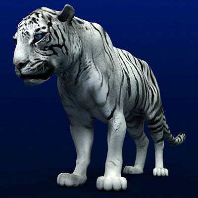 3D model of a White tiger