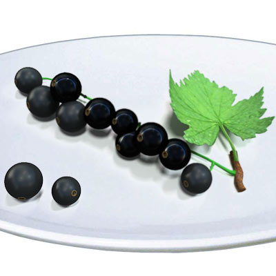 3D model of Black currant