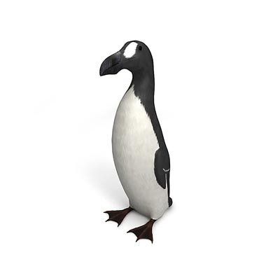 3D model of the Great Auk