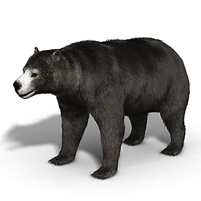 3D model of a Bear dog