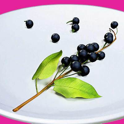 The 3D model of 11 common berries