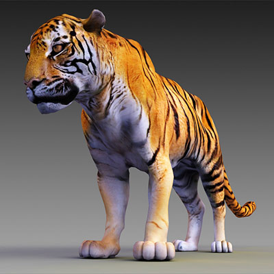 3D model of the Endangered animals collection