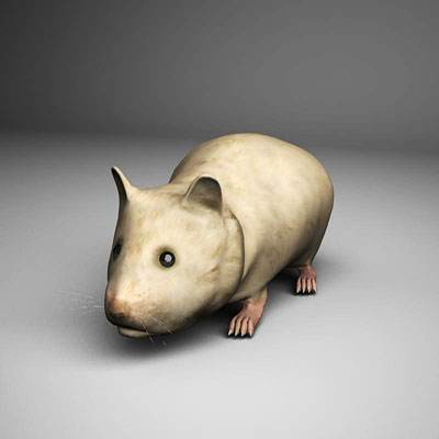 A photorealistic 3D model of a hamster