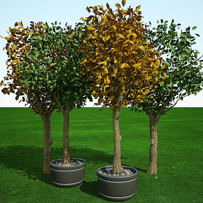 3D model of Cedar elm all in one