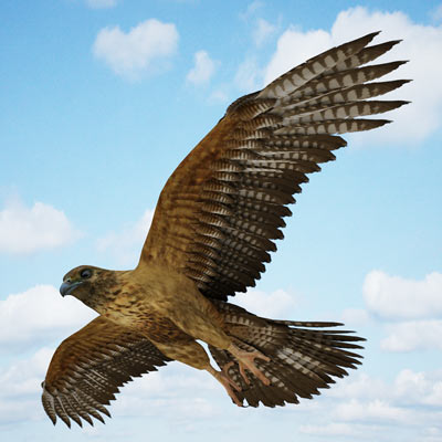 3D model of a Buzzard