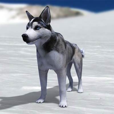 The 3D model of Husky