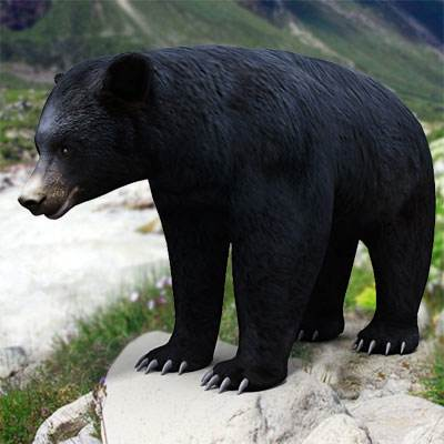 The 3D model of an American Black Bear
