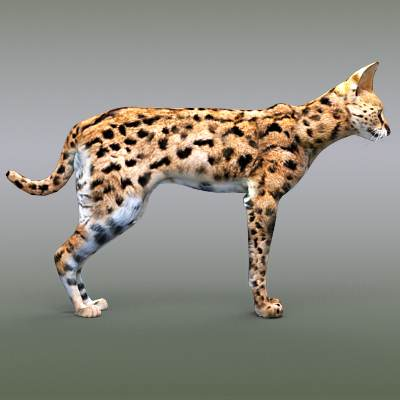 A photorealistic 3D model of a serval