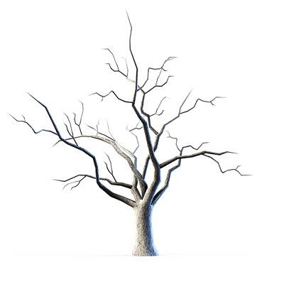 Many trees without leaves look like this 3D model