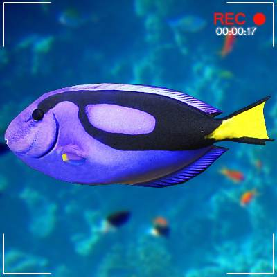 Bright blue tang 3D model