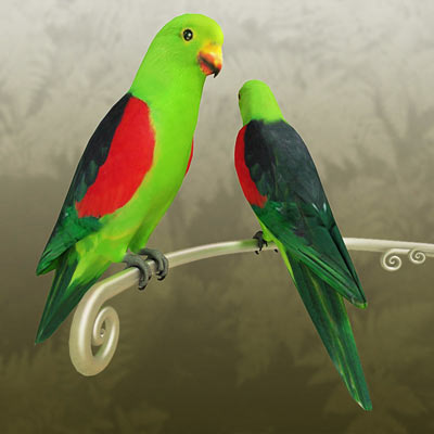 3D model of a red winged parrot